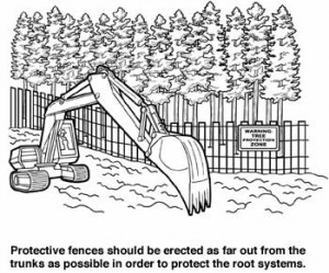 protecting trees
