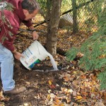 Treatment for the Hemlock Woolly Adelgid