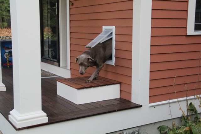 Building A Step For A Dog Door A Concord Carpenter