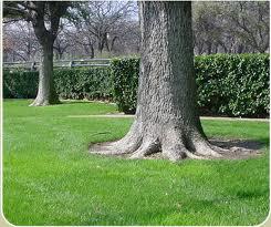 How To Install Bark Mulch Around Trees